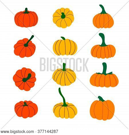 Set Of Pumpkins. Collection Of Orange, Red, Yellow Pumpkins. Elements For Halloween And Thanksgiving