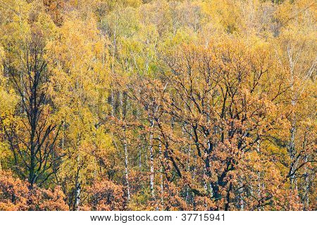 Natural Autumn Forest