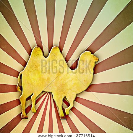 Sunburst Camel