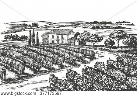Summer Landscape, Provence, Grape Vine, Vineyard, Hand Drawn Vector Illustration Realistic Sketch