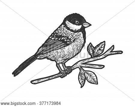 Titmouse Great Tit Bird On Tree Branch Sketch Engraving Vector Illustration. T-shirt Apparel Print D