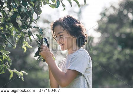 Dark-haired Boy Cutting Branches In The Garden And Looking Involved