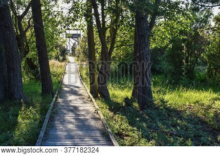 Wooden Footbridge To A Birdwatching Tower In The Swedish Nature Reserve Beijershamn On The Island Ol