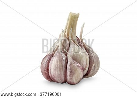 Unpeeled Bulb Of Garlic With Cloves, Isolated On White Background. Vegetable, . Close Up, Copy Space