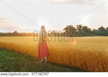 Young Woman Walks Along Wheat Field. Contrast Of Green Grass And Ripe Ears .