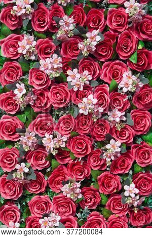 Paper Roses  Background Image, A Wall Decorated With Red Colorful Flowers.