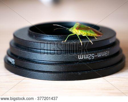 Creepy Crawly Stink Bug On Camera Equipment