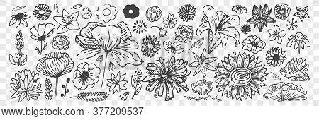 Hand Drawn Flowers Doodle Set. Collection Of Pencil Chalk Drawing Sketches Different Blossoming Bloo