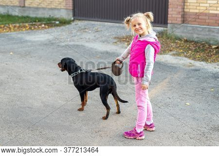 Cute Adorable Little Blond Caucasian Kid Girl Walking With German Terrier Puppy Dog On Leash On Sunn