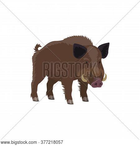Boar Wild Animal Vecor Isolated Icon. Zoo Predatory Mammal And Hunt Trophy Aper Hog