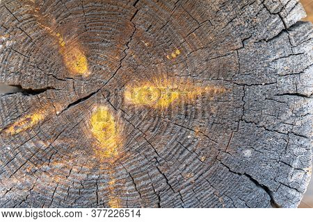 An Old Tree Trunk With Knots Cracks And Annual Rings. Wooden Background. Natural Wood Texture. Brown