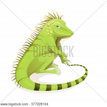 Realistic Hand Drawn Iguana Vector Cartoon. Green Exotic Jungle And Rainforest Reptile Zoology Illus