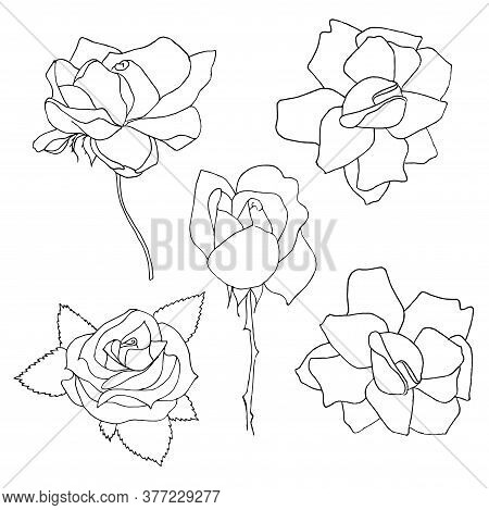 Rose Original Set. Monochrome Ink Hand Drawn Flowers Art Design Element Object Isolated Stock Vector