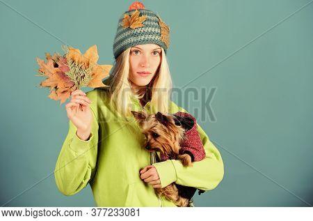 Regular Flea Treatment. Girl Hug Cute Dog And Hold Fallen Leaves. Woman Carry Yorkshire Terrier. Tak