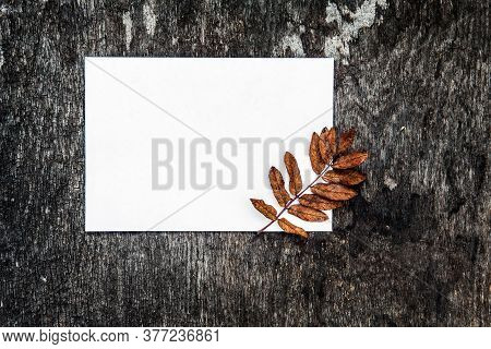 Blank Paper And Autumnal Leaf On The Grunge Background Closeup