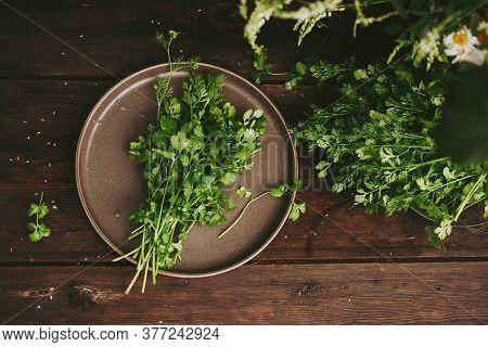 A Bunch Of Cilantro, Fresh Coriander On A Wooden Dark Table. Fresh Greens Rustic Style. Authentic St