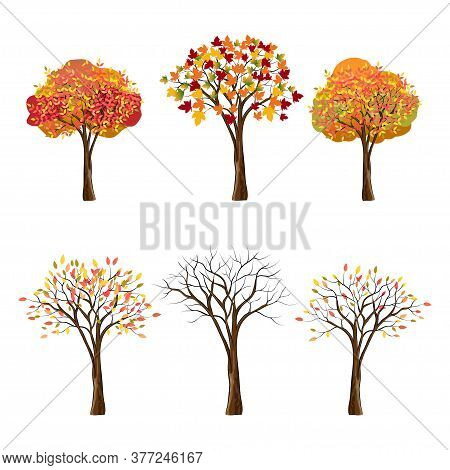 Vector Set Of Autumn Trees Isolated On White Background, Collection Of Autumn Cartoon Trees In Red,