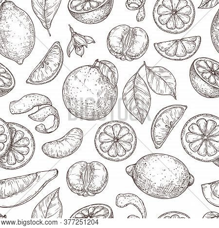 Citrus Sketch Pattern. Natural Lemon Orange Leaves, Lime Fruits Background. Vintage Botanical Branch