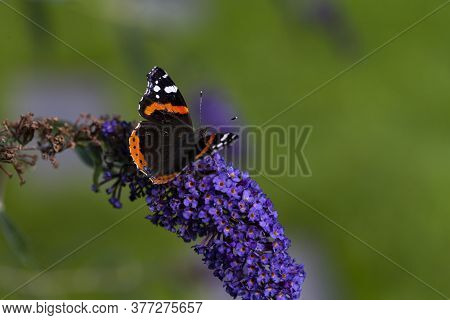 Image Shows A Butterfly On A Purple Licac Flower