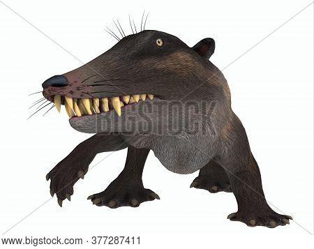 Ambulocetus Mammal On White 3d Illustration - Ambulocetus Was The Primitive Otter-like Ancestor Of T