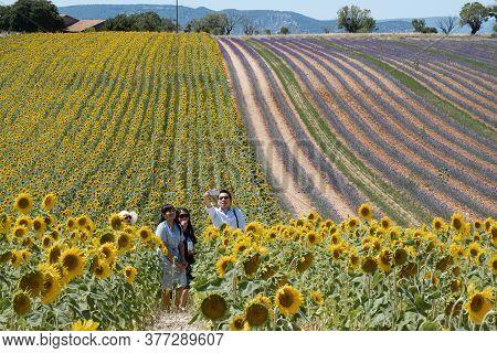 Valensole, France - July 5, 2020: Valensole, France - July 5, 2020: Asian Tourists Enjoy The Beauty