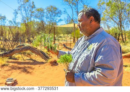 Kings Creek, Australia - Aug 21, 2019: Australian Aboriginal Native Man Shows The Bush Plants Used D