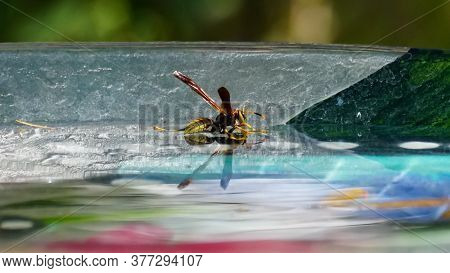 A Yellow Jacket Enjoys The Clear Water In A Colorful Glass Bowl.