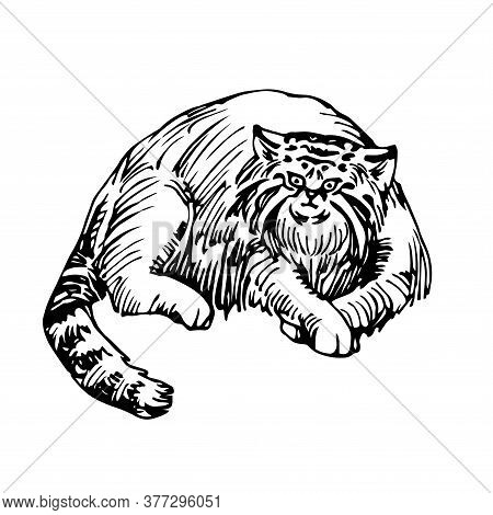 Lying Wild Mammalian Cat, Manul, Asian Rare Animal, For Logo Or Emblem, Vector Illustration With Bla