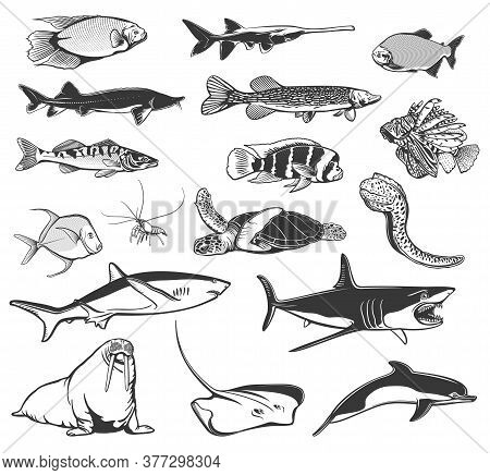 Fish And Animals Of Sea And Ocean Vector Icons With Isolated Shark, Dolphin And Sea Turtle, Stingray