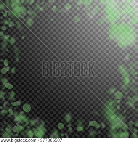 Green Flower Petals Falling Down. Adorable Romantic Flowers Vignette. Flying Petal On Transparent Sq