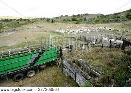 Pau Brasil, Bahia / Brazil - April 17, 2012: A Truck For Transporting Livestock Is Seen On A Farm In