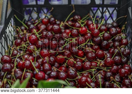 Bright Red Ripe Sour Cherries In A Basket For Sale In At An Outdoor Farmers Market In Old Town Kotor
