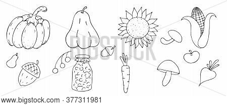 Autumn Harvest - Mushrooms, Pumpkin, Sunflower, Corn From The Garden, Freehand Drawing, Vector Set I