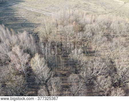 Leafless Trees In Early Spring, Aerial View. Gloomy Landscape.