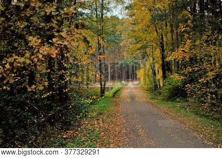 Autumn Park. Fall Road With Yellow Leaves . Autumn Alley.autumn Road With Trees With Yellow Foliage.