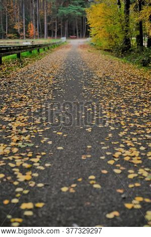 Autumn Park. Fall Road . Autumn Alley.autumn Road With Trees With Yellow Foliage.autumn Landscape. F