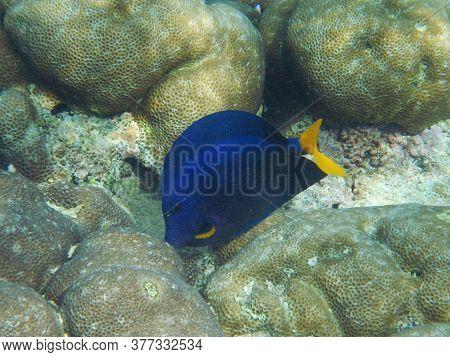 The Diving On Socotra Island, Indian Ocean, Yemen