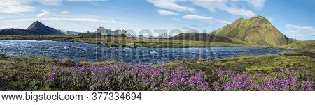 Beautiful Wide Panoramic Icelandic Landscape With Wild Pink Flowers, Blue Glacier River And Green Mo
