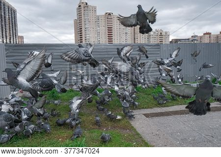 Flock Of Pigeons Took Off At Close Range