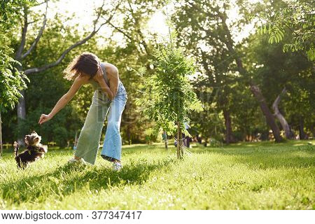 A Young Girl Runs And Plays In A Green Park With Her Yorkshire Terrier. Woman On A Walk Training Sma