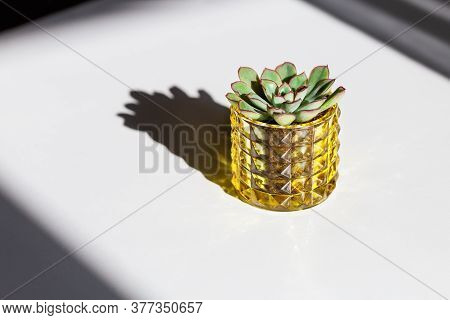 Single Evergreen Succulent Plant On White Table Echeveria In Glass Pot With Hard Shadows From Sun. B