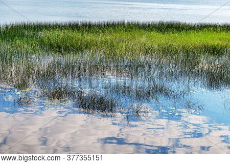 Lake And Sky Reflection. Landscape. Water With Marsh Grass