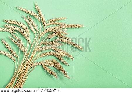 Spike Of Wheat Close Up. Cereal Crop. Rich Harvest Creative Concept. Top View And Copy Space.