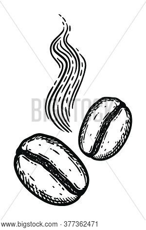 Aromatic Roasted Coffee Beans. Hand Drawn Engraving Graphic Vector Illustration In Black Isolated On