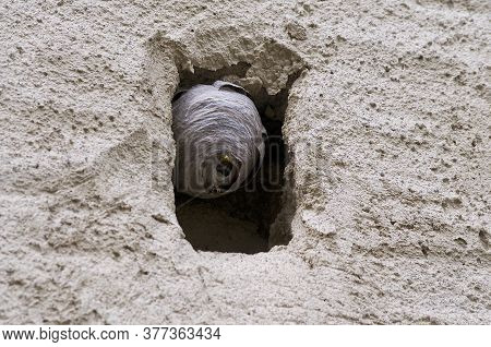 Close Up Of A Wasp Nest Made On A Small Stone Window Of A Traditional Old Village House Located In T