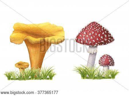 Set Of Watercolor Chanterelles And Redcap Fly Agarics With Grass Isolated On White. Wild Forest Mush
