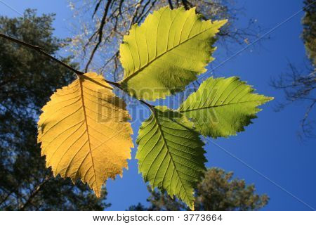 The Yellow Folios Against A Sky Background.