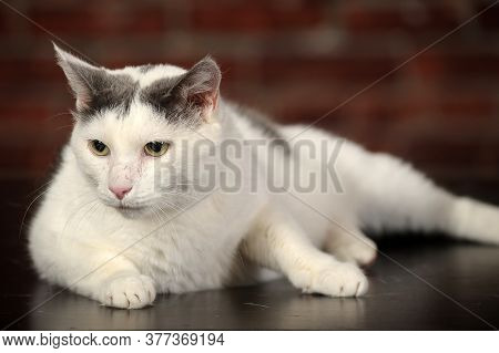 White Cat With Black Spot