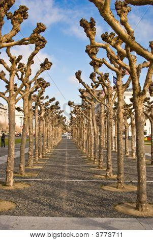 Artful Tree Alley