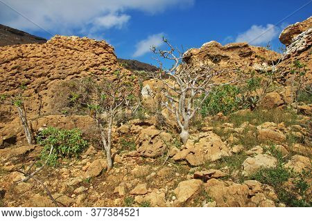 The Landscape On Homhil Plateau, Socotra Island, Indian Ocean, Yemen